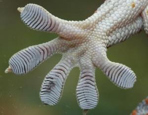 yıldızgemisi-geckofeet-eyırdefterı